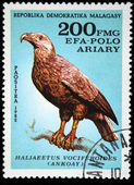 Malagasy Republic - CIRCA 1982: A stamp printed by Malagasy Republic (Madagascar) shows the Bird Madagascar Fish-eagle - Haliaeetus vociferoides, stamp is from the series, circa 1982 — Stock Photo