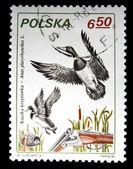 POLAND - CIRCA 1981: A stamp printed in Poland shows Mallard - Anas platyrhynchos, circa 1981 — Stock Photo