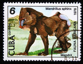 CUBA - CIRCA 1978: A stamp printed by Cuba shows the Mandrill - Mandrillus sphinx, stamp is from the series, circa 1978 — Stock Photo