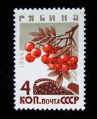 USSR - CIRCA 1964: A stamp printed in USSR shows mountain ash - Sorbus, series, circa 1964 — Stock Photo