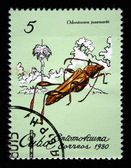 CUBA - CIRCA 1980: A stamp printed by Cuba shows the Bug odontocera josemartii, stamp is from the series, circa 1980 — Foto Stock