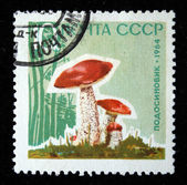 USSR - CIRCA 1964: A stamp printed in USSR shows mushrooms orange-cap boletus, circa 1964 — Photo