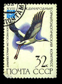 USSR - CIRCA 1982: A stamp printed in the USSR shows Oriental Stork - Ciconia boyciana, circa 1982 — Foto Stock