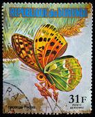 RESPUBLICA BURUNDI - CIRCA 1970s: A stamp printed in Burundi shows butterfly Pandoriana Pandora, circa 1970s — Stockfoto