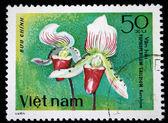 VIETNAM - CIRCA 1980: A stamp printed in Vietnam shows orchid Paphiopedilum Gallosum, series, circa 1980 — Stock Photo