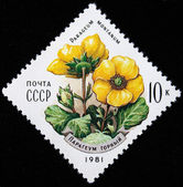 USSR - CIRCA 1981: A stamp printed in the USSR shows Avens - Parageum Montanium, circa 1981 — Stok fotoğraf