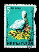 BULGARIA - CIRCA 1984: A stamp printed in the Bulgaria, shows a bird Pelicanus crispus, circa 1984 — ストック写真