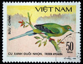 VIETNAM - CIRCA 1980: A stamp printed by Vietnam shows bird Pin-tailed Green Pigeon - Treron apicauba, stamp is from the series, circa 1980 — Stock Photo