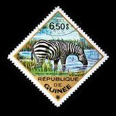 GUINEA - CIRCA 1975: A stamp printed in Guinea shows Plains Zebra - Equus quagga, circa 1975 — Stock Photo
