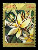 Kuba - ca. 1984: eine briefmarke gedruckt in kuba zeigt plumeria alba, ca. 1984 — Stockfoto
