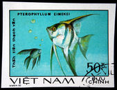 VIETNAM - CIRCA 1980: A stamp printed by Vietnam shows fish Pterophyllum eimelei, stamp is from the series, circa 1980 — Stock Photo