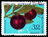 VIETNAM - CIRCA 1970s: A stamp printed in Vietnam shows Purple Mangosteen - Garcinia mangostana, circa 1970s — Stock Photo