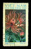 VIETNAM - CIRCA 1970s: A stamp printed in Vietnam shows red chrysanthemum, circa 1970s — Stock Photo
