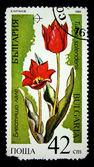 Bulgaria - circa 1989: un timbro stampato in bulgaria illustrato tulipani rossi, circa 1989 — Foto Stock