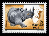 HUNGARY - CIRCA 1981: A Stamp printed in Hungary shows Black Rhinoceros - Diceros bicornis, circa 1981 — Stock Photo