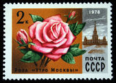 "USSR - CIRCA 1978: A stamp printed in USSR, shows rose ""Moscow Morning"" and Lomonosov University, circa 1978 — Stock Photo"