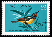 VIETNAM - CIRCA 1981: A stamp printed by Vietnam shows the Bird Ruby-cheeked Sunbird - Anthreptes singalensis, stamp is from the series, circa 1981 — Foto de Stock