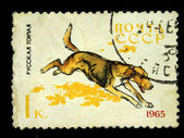 """USSR - CIRCA 1965: A stamp printed in USSR shows Russian Hound, series """"Dogs"""", circa 1965 — Foto de Stock"""