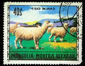 MONGOLIA - CIRCA 1971: A stamp printed in Mongolia shows sheeps, circa 1971 — Stock Photo