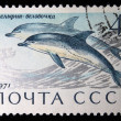 "USSR - CIRCA 1971: A stamp printed in the USSR (Russia) shows a Sea Mammal with the inscription ""Common dolphin"", from the series ""Sea Mammals"", circa 1971 — Stock Photo"