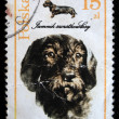 POLAND - CIRCA 1989: A stamp printed in the Poland shows Smooth-haired Dachshund, circa 1989 — Stock Photo