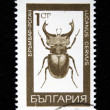 BULGARIA - CIRCA 1968: A stamp printed by Bulgaria shows Bug - a stag beetle (Lucanus Cervus. L), series beetle, circa 1968 - Stock Photo