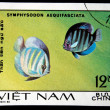 VIETNAM - CIRCA 1980: A Stamp printed in VIETNAM shows a Symphysodon aequifasciata, series &amp;quot;Aquarium Fish&amp;quot;, circa 1980 - Stock Photo