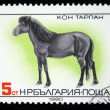 Stock Photo: BULGARI- CIRC1980: stamp printed in BULGARIshows Tarpan, horse breed series , circ1980