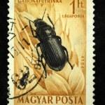 Постер, плакат: HUNGARY CIRCA 1952