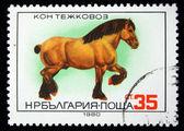 BULGARIA - CIRCA 1980: A stamp printed in Bulgaria shows Shire horse, circa 1980 — Stock Photo