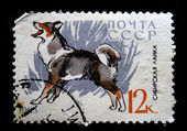 USSR - CIRCA 1965: A stamp printed in the USSR shows Siberian Husky, circa 1965 — Stockfoto