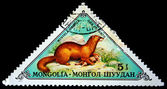 MONGOLIA- CIRCA 1973: A stamp printed in Mongolia shows Siberian Mountain Weasel - Mustela sibirica, series, circa 1973 — Stock Photo