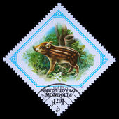 MONGOLIA - CIRCA 1982: A stamp printed in Mongolia shows wild pig, one stamp from series, circa 1982 — Stockfoto