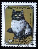 MONGOLIA- CIRCA 1979: A stamp printed in Mongolia shows Smoke Persian cat, series, circa 1979 — Stock Photo
