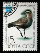 USSR - CIRCA 1982: A stamp printed in the USSR shows bird Sociable Lapwing - Chettusia gregaria, circa 1982 — Stock Photo