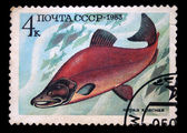 USSR - CIRCA 1983: A stamp printed in the USSR shows Sockeye salmon - Oncorhynchus nerka, circa 1983 — Photo