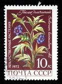USSR - CIRCA 1972: A stamp printed in the USSR shows flower solanum laciniatum, circa 1972 — Stock Photo