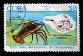 Kuba - cca 1990: známka vytištěna na kubě ukazuje ostnatý humr - panulirus argus, cca 1990 — Stock fotografie