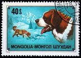 Mongolia - około 1978: znaczek wydrukowany w mongolii przedstawiono st. bernard pies, pieczątkę z serii, około 1978 — Zdjęcie stockowe