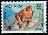 VIETNAM - CIRCA 1981: A stamp printed in VIETNAM shows Macaca speciosa, series, circa 1981 — Foto Stock