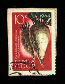 USSR - CIRCA 1964: A stamp printed in the USSR shows Sugar beet, circa 1964. — ストック写真