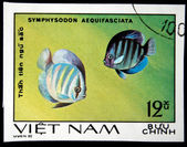 "VIETNAM - CIRCA 1980: A Stamp printed in VIETNAM shows a Symphysodon aequifasciata, series ""Aquarium Fish"", circa 1980 — Stock Photo"