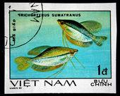 Vietnam - circa 1980 — Photo
