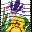 A stamp printed iris — Stock Photo
