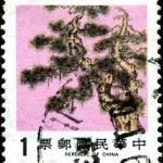 Pine Tree one of three symbols of winter time — Stock Photo