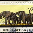 African Elephant Herd, Natural History issue — Stock Photo
