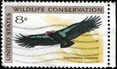 California condor — Stock Photo