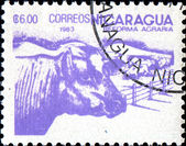 Agriculture Nicaragua series — Stock Photo