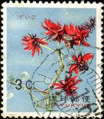 эритрина variegata — Стоковое фото
