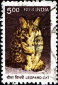 Leopard cat — Stock Photo